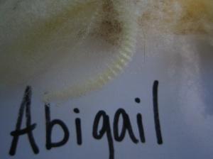Abigail-crimp