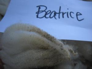 Beatrice-crimp