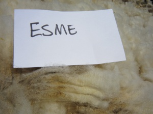 Esme-crimp