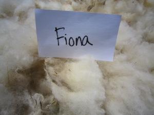 Fiona-crimp