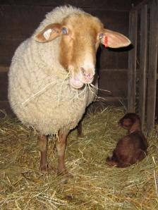 Beatrice lamb