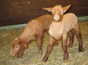 Bertha's Twins