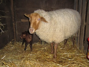 Erin lamb