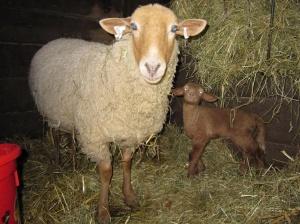 Esme lamb