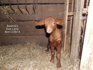 Beatrice's Lamb