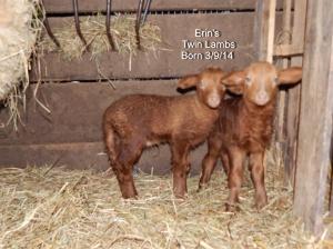Erin's Lamb