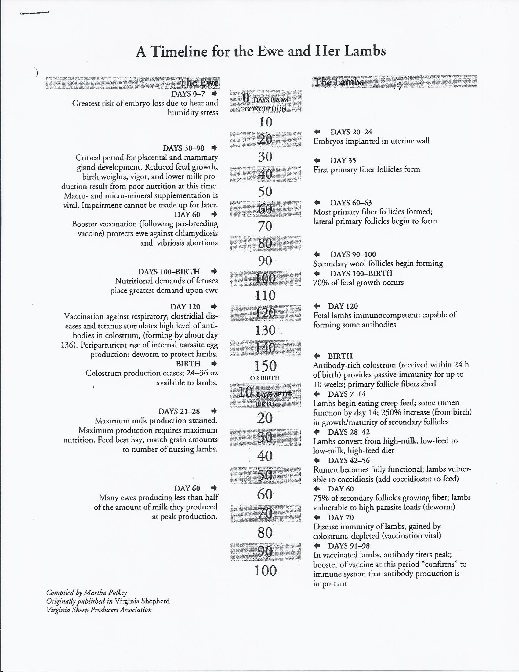 timeline of fetal developement