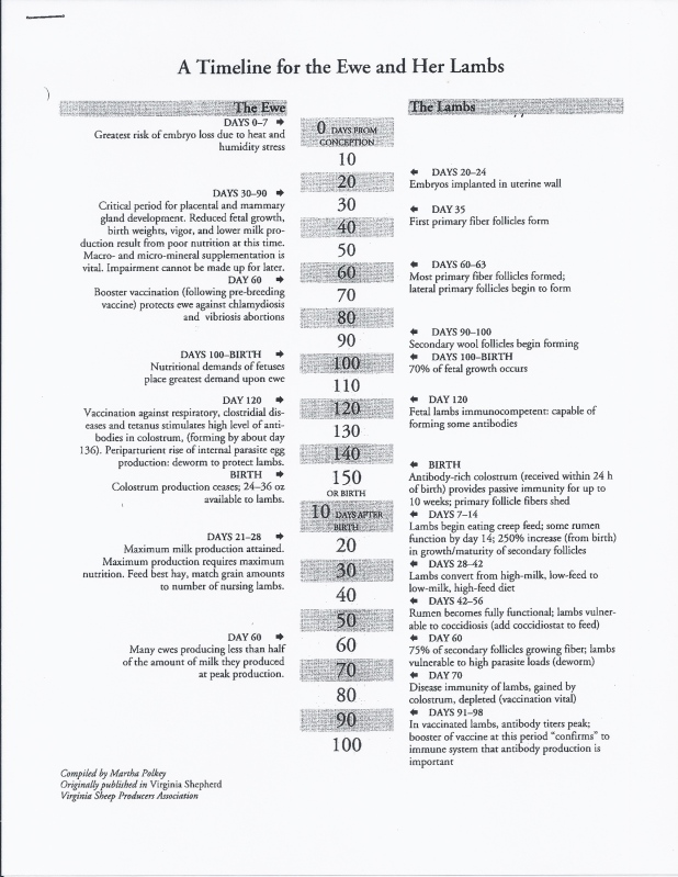 timeline of fetal developement